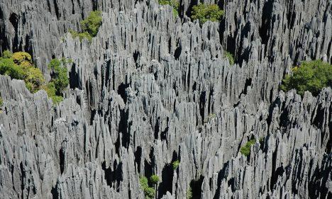 Špičaté jehlany kamenný les Tsingy de Bemaraha vznikaly nejdříve pod zemí, kde voda obrušovala vápenec. Nakonec však strop odplavily monzunové deště. Na dně skalních kaňonů se ukrývá úplně jiný svět, jakási skrytá přírodní pokladnice. Více než polovina kamenného lesa proto zůstává naprosto nedotčená jako přísně střežená přírodní rezervace.