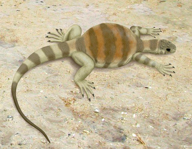 Želví předchůdce - Eunotosaurus