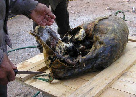 Štědrovečerní tabule v Grónsku není nic pro slabé povahy. Ostrované si dopřávají tradiční vánoční pokrmy zvané mattak (syrová kůže z velryby s vrstvou podkožního tuku) a kiviak (lachtan nadívaný alkami, které se v jeho útrobách nechají přibližně sedm měsíců uležet). Jde prý o náramnou pochoutku.