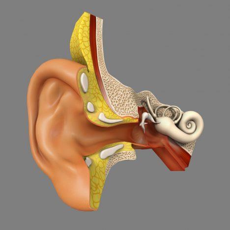 Náš smysl pro rovnováhu je zajišťován vestibulárním systémem ve vnitřním uchu aposkytuje nám důležitou zpětnou vazbu opoloze hlavy avšech pohybech. Kinetické čidlo se skládá ze tří kanálků naplněných tekutinou. Na jejich konci jsou svazky tenkých vlasových buněk. Při každém pohybu hlavou zatlačí tekutina na vlásky, které se ohnou avyšlou do mozku signál opohybech hlavy.