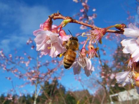 Pokud by včely vyhynuly, čelili bychom globální katastrofě, mnoho druhů ovoce a plodin by zmizelo. Ohrožena by byla i ekologická rovnováha.