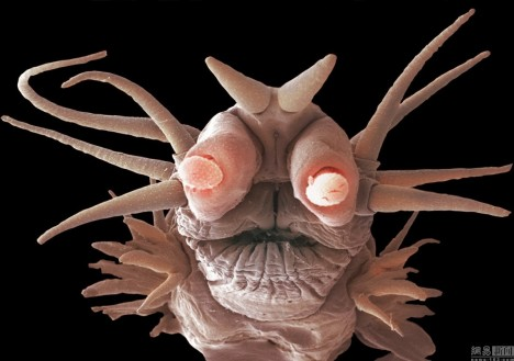 Podmořští červi žijí v téměř vařící vodě poblíž podmořských průduchů a živí se jedovatými oxidy síry.