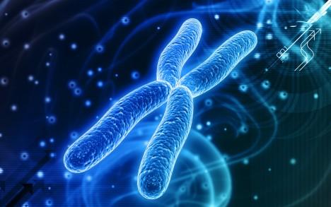 Rozdíl, který může ovlivňovat naši emocionální citlivost je v délce alel, které tvoří část našeho chromozomu.