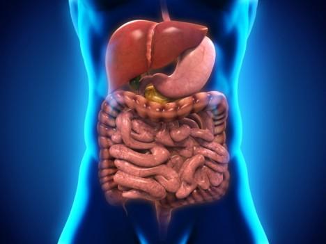 Během závodu se silně omezí přítok krve do střev a dochází v nich k drobným trhlinkám, kterými uniká střevní obsah do krve. Bakterie pak dokáží způsobit v těle rozsáhlou otravu.