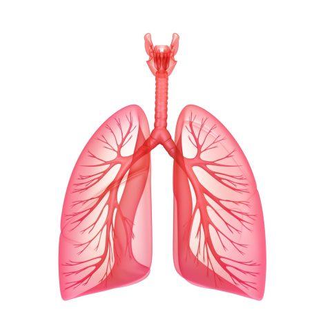 Dýchání je řízeno respiračním centrem v mozku. Snímače v této oblasti spolu s čidly v krční tepně a aortě detekují hladinu plynů v tekutině, která obklopuje mozek. Hlídají jak hladinu kyslíku, tak oxidu uhličitého. Při zvýšeném množství tohoto odpadního plynu nás tělo upozorní zvýšeným pocitem dušnosti a dá pokyn k rychlejšímu dýchání.