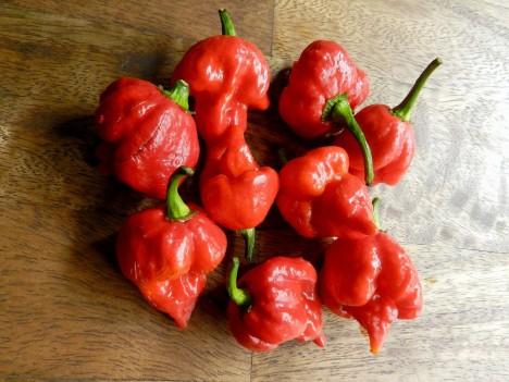 4. Paprička s komplikovaným názvem Trinidad Scorpion Butch T byla dříve držitelem titulu nejpálivějšího chilli na světě. Dosahuje 1 463 000 Scovilleho jednotek. I ona byla již překonána...