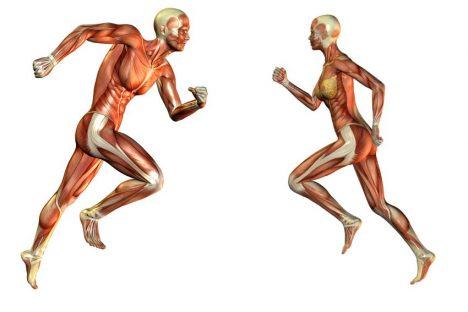 anatomie běhu 2