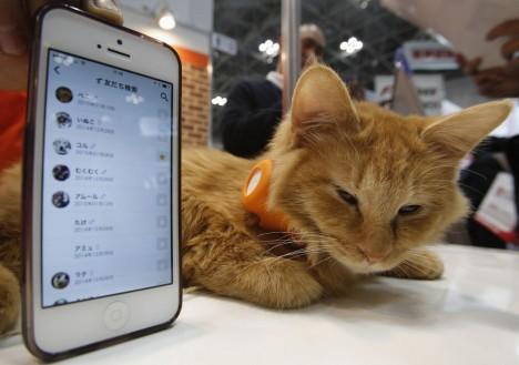 Nová vychytávka, která by se na trhu měla objevit už v tomto roce, dokáže sledovat potřeby a nálady nejen psů ale i koček.
