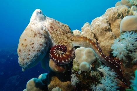 6. Chobotnice: Chobotnice mají pod kůží elastické pigmentové buňky plné nejrůznějšího barviva, od žluté přes hnědou či třeba červenou. Barvy dokážou míchat tak rychle a dokonale, že splývají se svým pozadím. Některé druhy chobotnic ale zvládají napodobovat i tvar a chování jiných ryb, aby zmátly predátory.