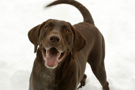 happy-dog-in-the-snow2009-10-29-0143