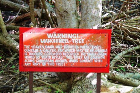 Varování před stromem.