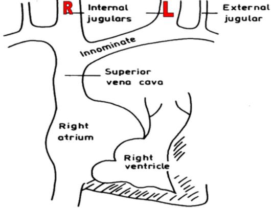 Jugular Venous Pulse and Pressure (JVP) Examination