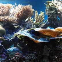 London Zoo Aquarium Epos Design