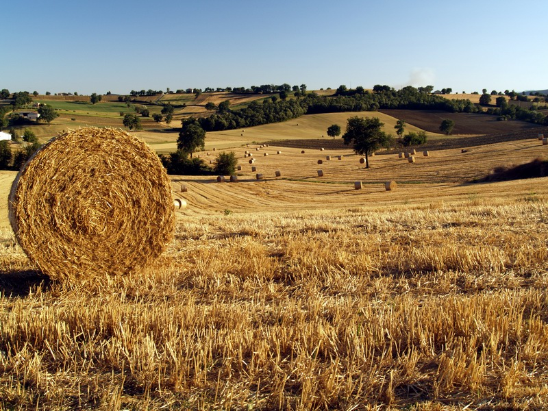 Fields_of_gold_Umbria