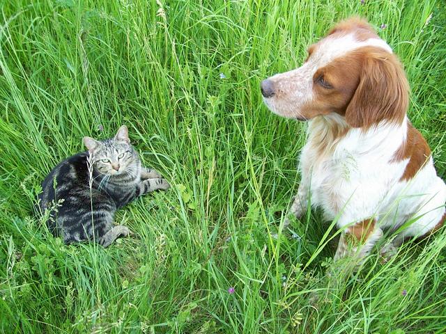 Vanille et Diego dans l'herbe
