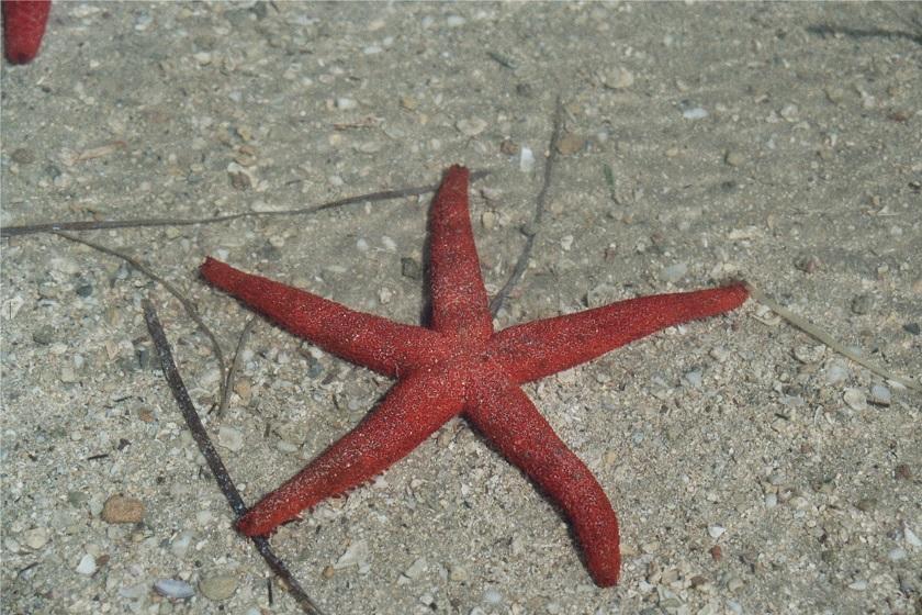 portocesareo-stellamarina