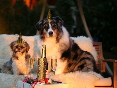Animali e l'incubo dei botti di Capodanno