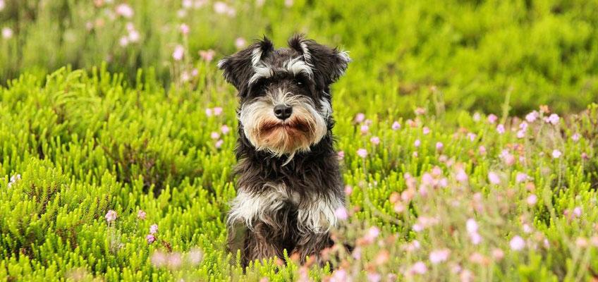 Passeggiate di primavera con il proprio cane