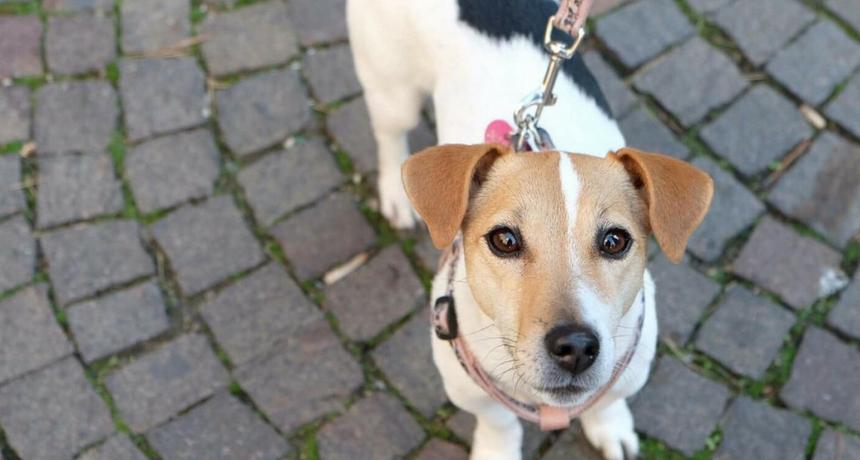 A Milano con il cane: cosa fare in città con i nostri amici a quattro zampe