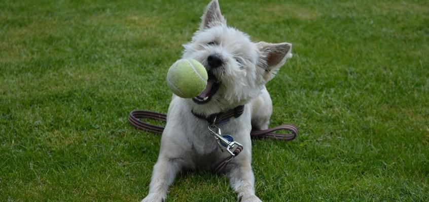 L'importanza del gioco per il benessere dei nostri animali