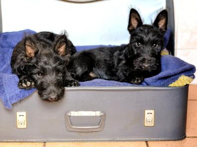 In vacanza con i nostri animali: tutto l'occorrente da mettere in valigia