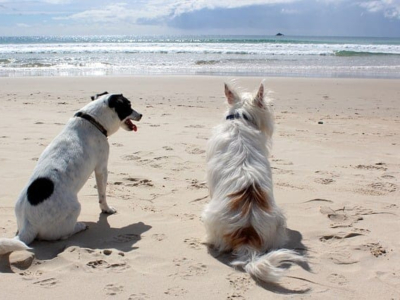 """In spiaggia con i nostri cani: consigli utili per non incorrere in """"salate"""" sorprese"""