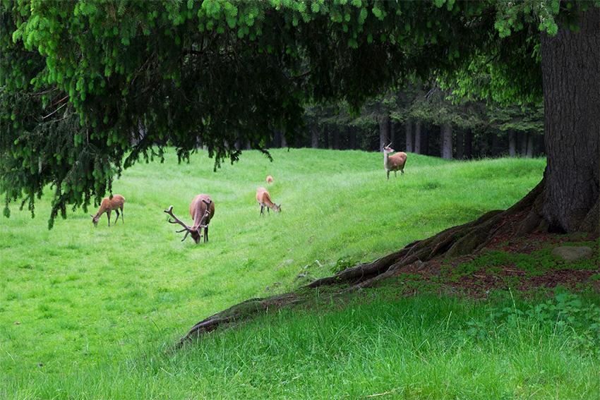 Visita al Parco Naturale di Paneveggio in Trentino Alto Adige