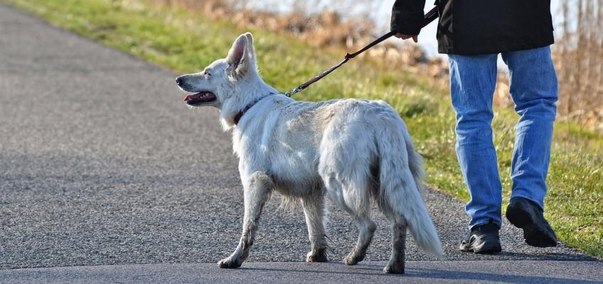 Educare il cane alla passeggiata con guinzaglio