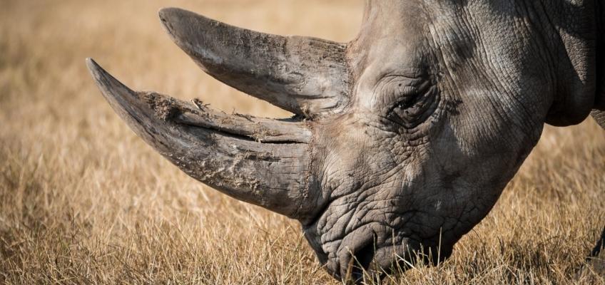 CITES e regolamentazione sul commercio delle specie in pericolo di estinzione