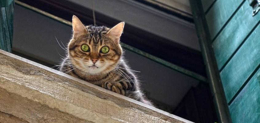 Caduta del gatto e riflesso vertebrale