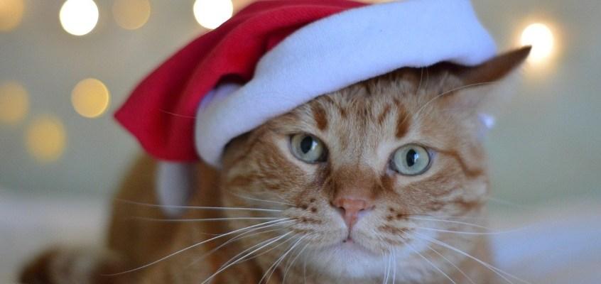 Feste di Natale in viaggio con i propri animali
