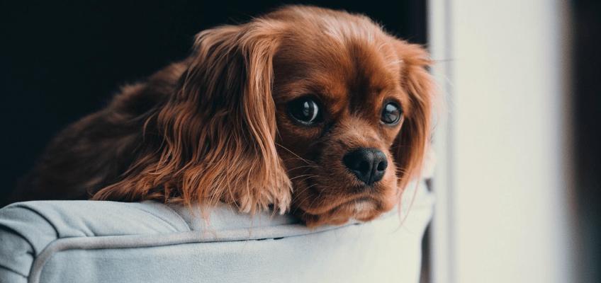 stress-dei-nostri-animali