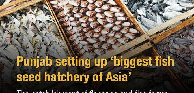 Fish Farms set up on 500 acres in Derawar, Bahawalpur