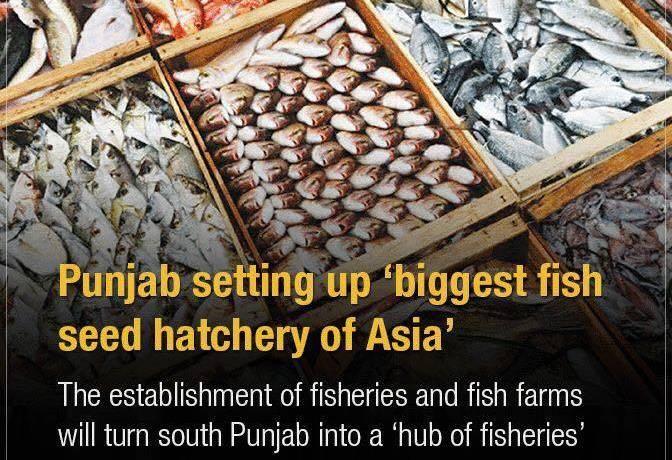 Fish Farms set up on 500 acres in Derawar, Bahawalpur