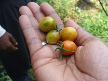 Agri-business based in Kilifi