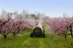 Cask tractor sprays a chemical pollutant insecticide