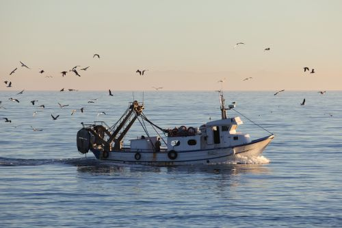 A new framework for the Common Fisheries Policy