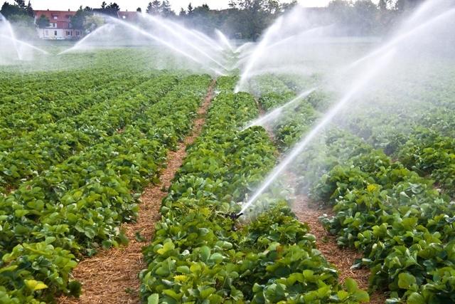 Vers une utilisation intelligente et durable de l'eau dans l'agriculture européenne