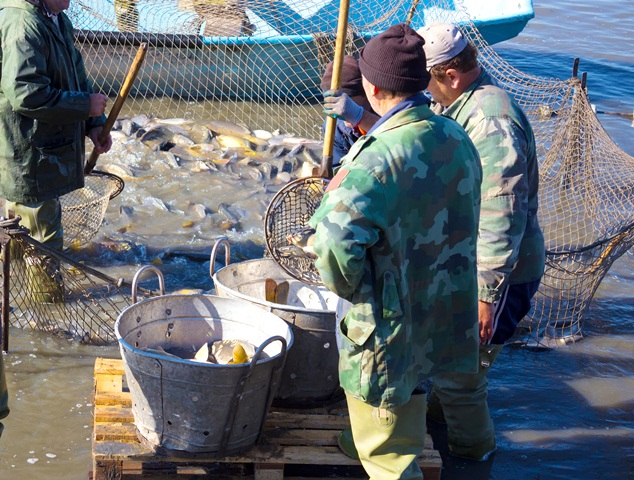 Overfishing and employment in fisheries