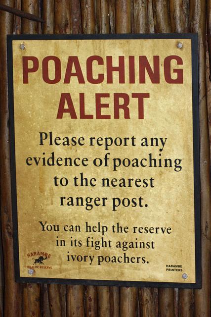 Wildlife trafficking in Africa: Endangered security
