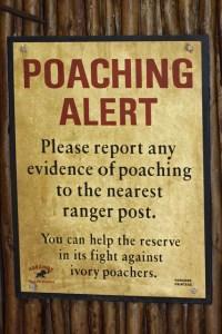Poaching alert