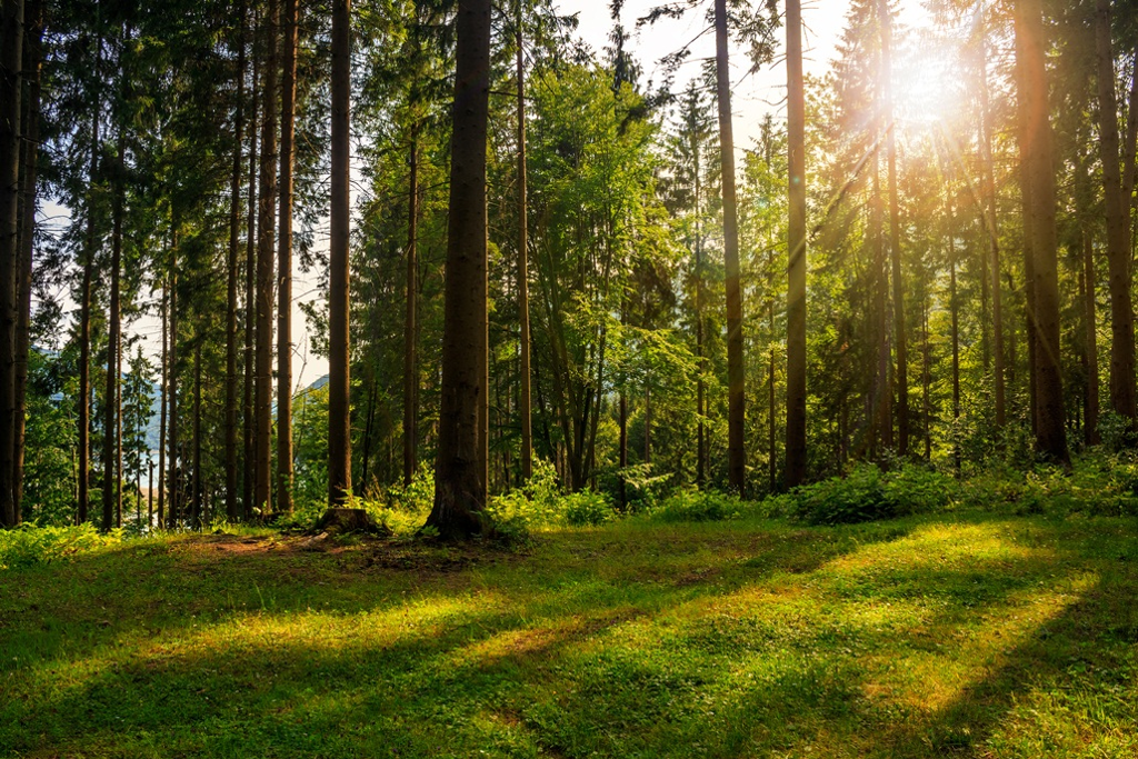 Ecosystem services : Valuing our natural capital