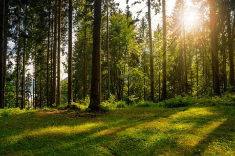 Ecosystem services: Valuing our natural capital