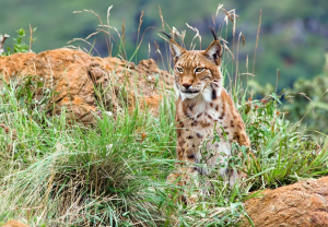 Safeguarding biological diversity: EU policy and international agreements