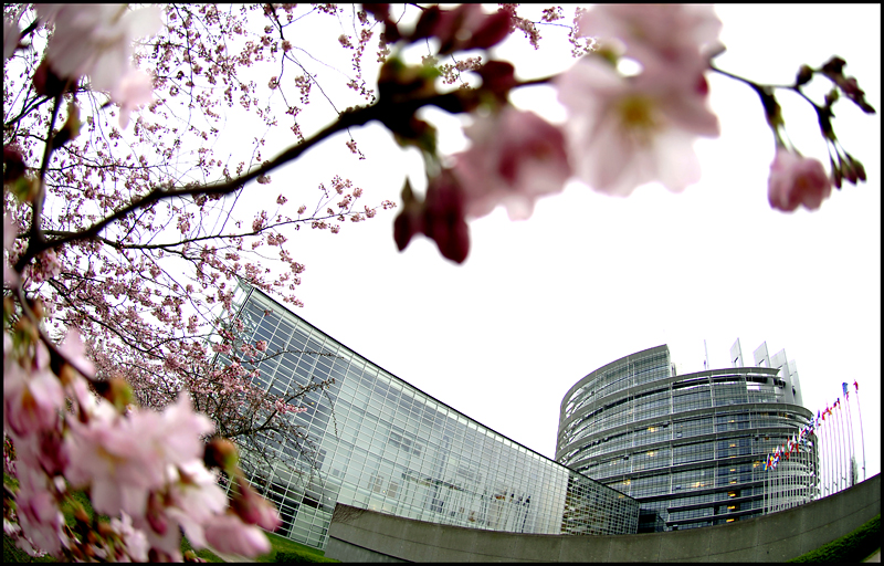 European Parliament Plenary Session – April II 2019