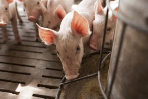 CE marked fertilising products [EU Legislation in Progress]