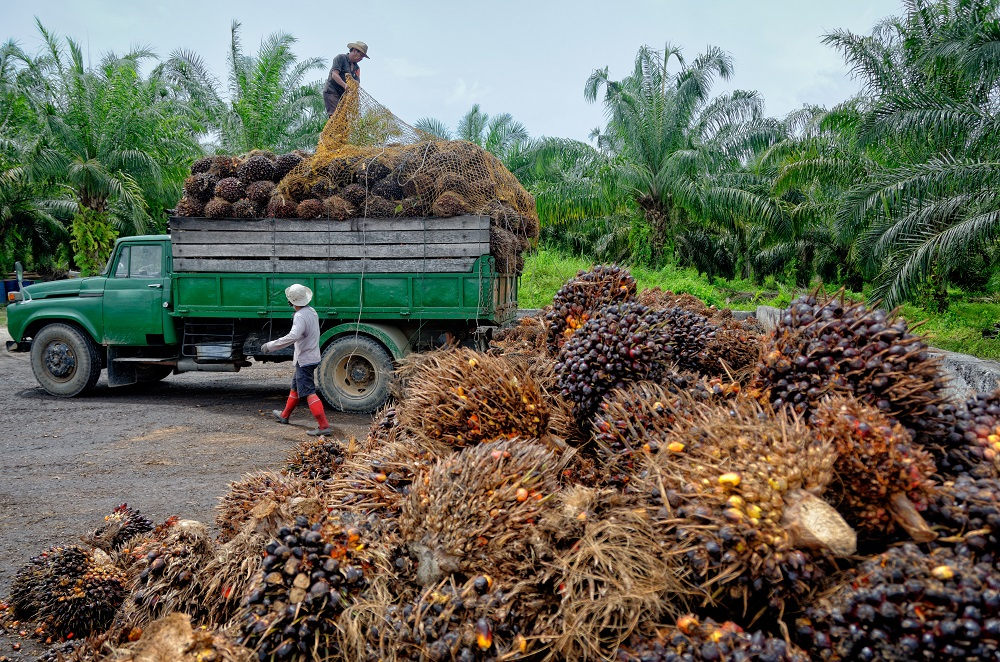 Palm oil: economic and environmental impacts