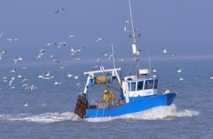 Un petit bateau de pêche bleu en mer poursuivit d'une bande de mouettes