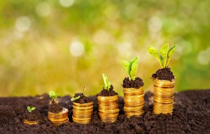 Money growing in soil, business success concept