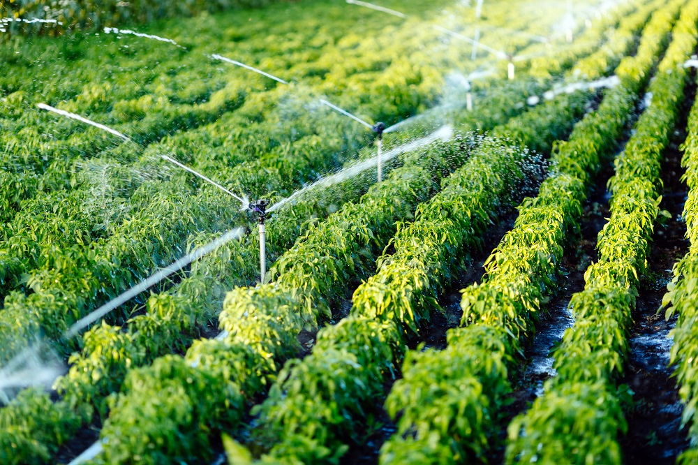 Irrigation in EU agriculture [Policy podcast]